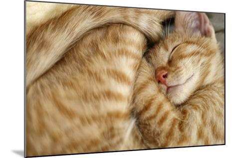 Sweet Dreams, Sleeping Cat-Bildagentur Zoonar GmbH-Mounted Photographic Print