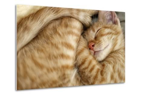 Sweet Dreams, Sleeping Cat-Bildagentur Zoonar GmbH-Metal Print