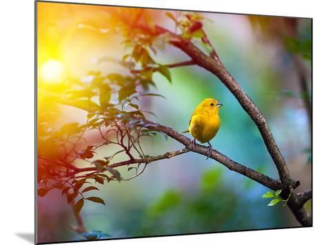 Yellow Bird Sitting on a Branch, Wildlife- seqoya-Mounted Photographic Print