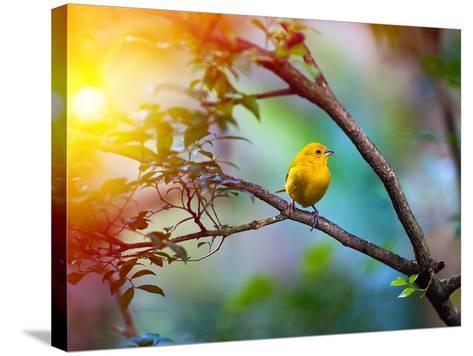 Yellow Bird Sitting on a Branch, Wildlife- seqoya-Stretched Canvas Print