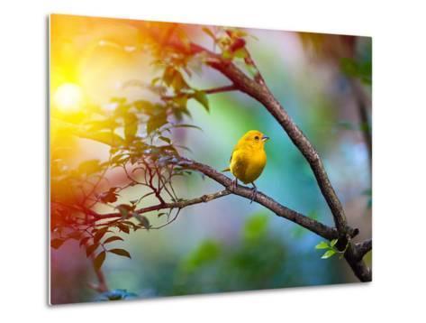 Yellow Bird Sitting on a Branch, Wildlife- seqoya-Metal Print