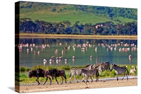 Zebras and Wildebeests Walking beside the Lake in the Ngorongoro Crater, Tanzania, Flamingos in The-Travel Stock-Stretched Canvas Print