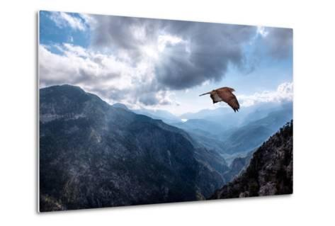Hawk Flying over the Mountains-muratart-Metal Print