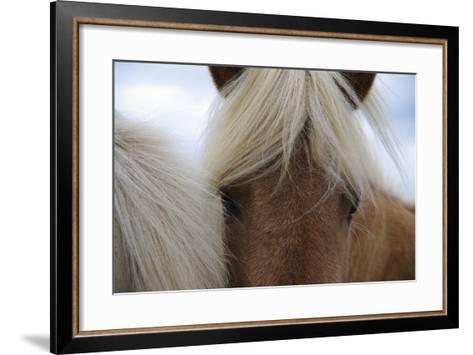 Eyes of Icelandic Horse-Igor Dymov-Framed Art Print