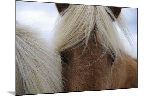 Eyes of Icelandic Horse-Igor Dymov-Mounted Photographic Print