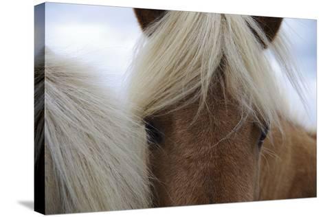 Eyes of Icelandic Horse-Igor Dymov-Stretched Canvas Print