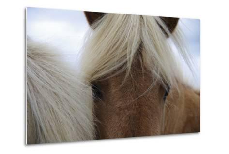 Eyes of Icelandic Horse-Igor Dymov-Metal Print