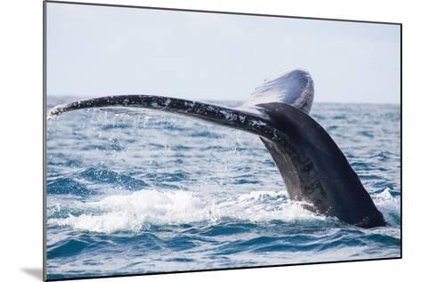 Tail of Whale/Whale Show the Tail above Water/It's a Excellent Photo, Picture, Illustration of Wild-Kirill Dorofeev-Mounted Photographic Print