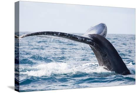 Tail of Whale/Whale Show the Tail above Water/It's a Excellent Photo, Picture, Illustration of Wild-Kirill Dorofeev-Stretched Canvas Print