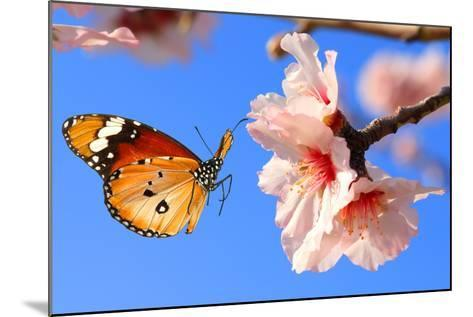 Butterfly and Pink Almond Tree Blossom-Protasov AN-Mounted Photographic Print