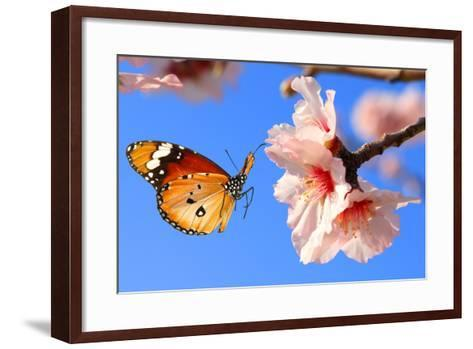 Butterfly and Pink Almond Tree Blossom-Protasov AN-Framed Art Print
