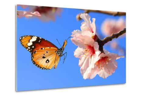 Butterfly and Pink Almond Tree Blossom-Protasov AN-Metal Print