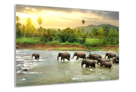 Elephants in River- Givaga-Metal Print