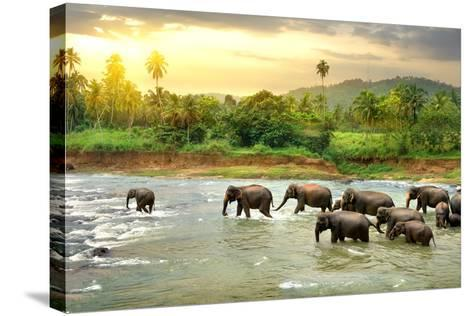 Elephants in River- Givaga-Stretched Canvas Print
