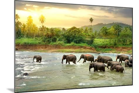 Elephants in River- Givaga-Mounted Photographic Print