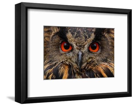 Detail Face Portrait of Bird, Big Orange Eyes and Bill, Eagle Owl, Bubo Bubo, Rare Wild Animal in T-Ondrej Prosicky-Framed Art Print