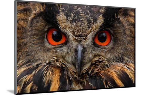 Detail Face Portrait of Bird, Big Orange Eyes and Bill, Eagle Owl, Bubo Bubo, Rare Wild Animal in T-Ondrej Prosicky-Mounted Photographic Print