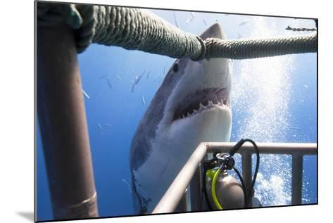 Great White Shark Showing its Teeth in Front of Divers in a Diving Cage.- VisionDive-Mounted Photographic Print