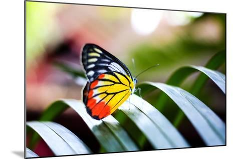 Colorful Butterfly Resting on the Palm Tree Leaf in Thailand.- Rrrainbow-Mounted Photographic Print