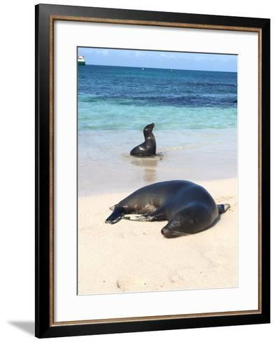 Sea Lions on the Shore- Kpuleo-Framed Art Print