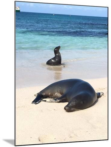 Sea Lions on the Shore- Kpuleo-Mounted Photographic Print
