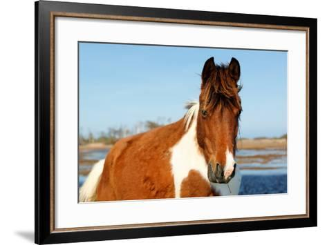 Wild Horse at Chincoteague National Wildlife Refuge, Virginia, Usa.-Jay Yuan-Framed Art Print