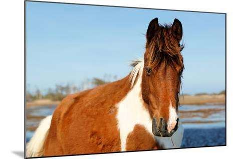 Wild Horse at Chincoteague National Wildlife Refuge, Virginia, Usa.-Jay Yuan-Mounted Photographic Print