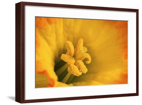 Macro Photo of Daffodil Stamen-Andrew Williams-Framed Art Print