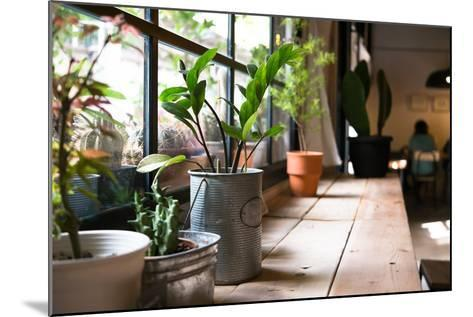 A Small Plant Pot Displayed in the Window- imnoom-Mounted Photographic Print