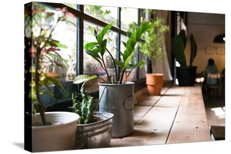 A Small Plant Pot Displayed in the Window- imnoom-Stretched Canvas Print
