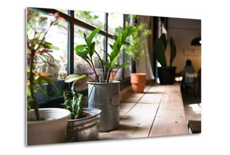 A Small Plant Pot Displayed in the Window- imnoom-Metal Print