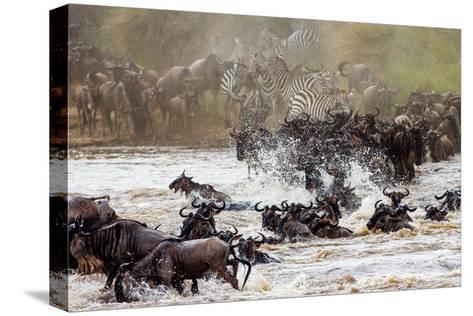 Wildebeests are Crossing Mara River. Great Migration. Kenya. Tanzania. Masai Mara National Park. An-GUDKOV ANDREY-Stretched Canvas Print