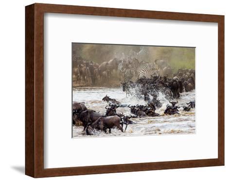 Wildebeests are Crossing Mara River. Great Migration. Kenya. Tanzania. Masai Mara National Park. An-GUDKOV ANDREY-Framed Art Print