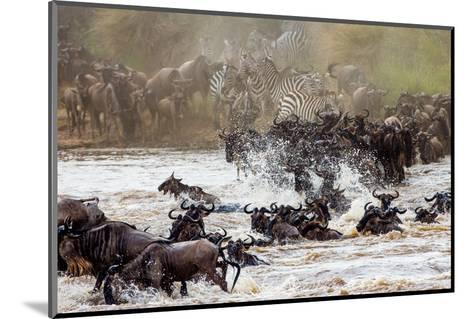Wildebeests are Crossing Mara River. Great Migration. Kenya. Tanzania. Masai Mara National Park. An-GUDKOV ANDREY-Mounted Photographic Print