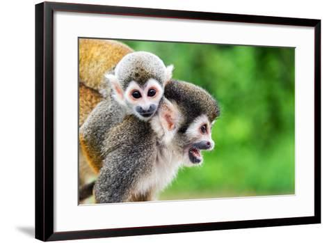 Two Squirrel Monkeys, a Mother and Her Child in the Amazon Rainforest near Leticia, Colombia-Jess Kraft-Framed Art Print