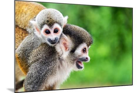 Two Squirrel Monkeys, a Mother and Her Child in the Amazon Rainforest near Leticia, Colombia-Jess Kraft-Mounted Photographic Print