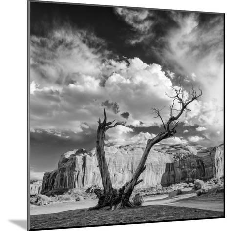 Monument Valley Juniper Tree and Mesa-Silvio Ligutti-Mounted Photographic Print