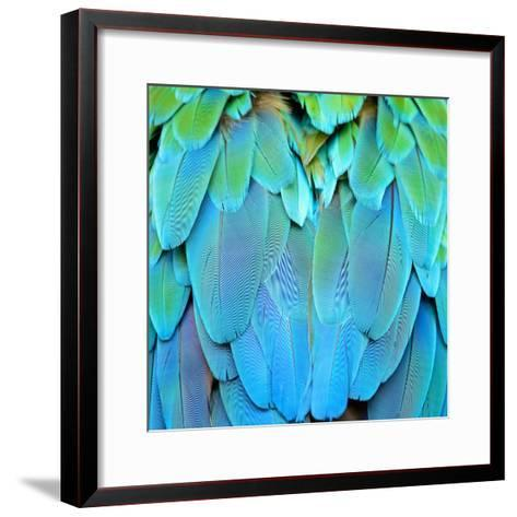 Colorful Feathers, Harlequin Macaw Feathers Background Texture-Panu Ruangjan-Framed Art Print