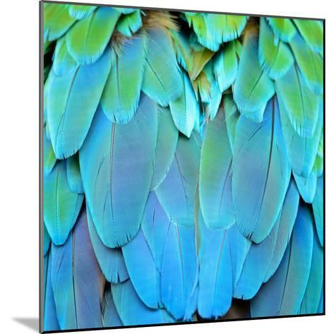 Colorful Feathers, Harlequin Macaw Feathers Background Texture-Panu Ruangjan-Mounted Photographic Print