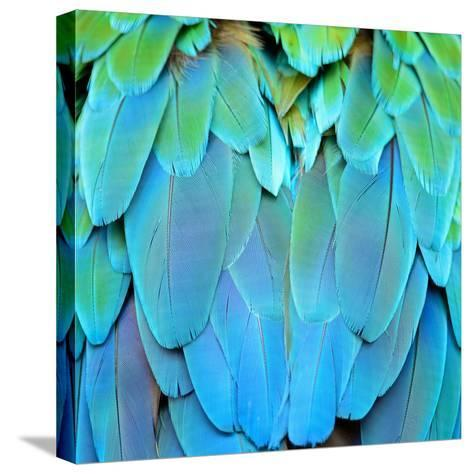 Colorful Feathers, Harlequin Macaw Feathers Background Texture-Panu Ruangjan-Stretched Canvas Print