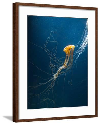 Jellyfish- ILeysen-Framed Art Print