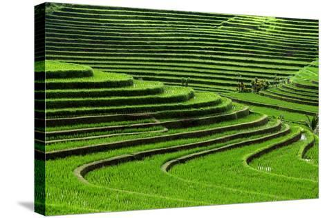 Terrace Rice Fields, Bali, Indonesia- Marko5-Stretched Canvas Print