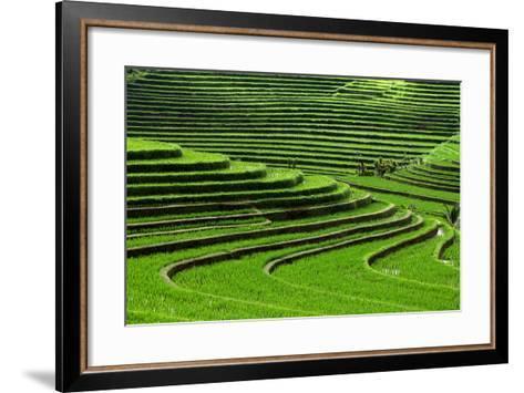 Terrace Rice Fields, Bali, Indonesia- Marko5-Framed Art Print