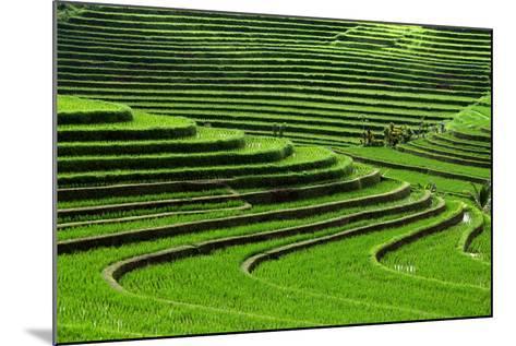 Terrace Rice Fields, Bali, Indonesia- Marko5-Mounted Photographic Print