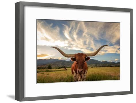 Texas Longhorn Steer in Rural Utah, Usa.-Johnny Adolphson-Framed Art Print