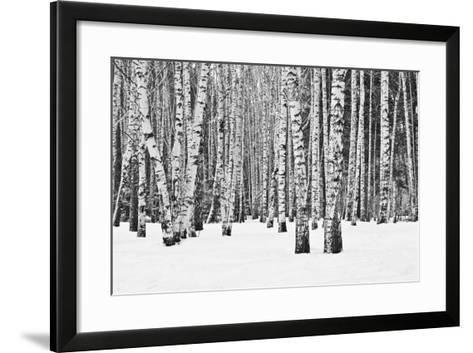 Birch Forest in Winter in Black and White- furtseff-Framed Art Print