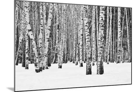 Birch Forest in Winter in Black and White- furtseff-Mounted Photographic Print
