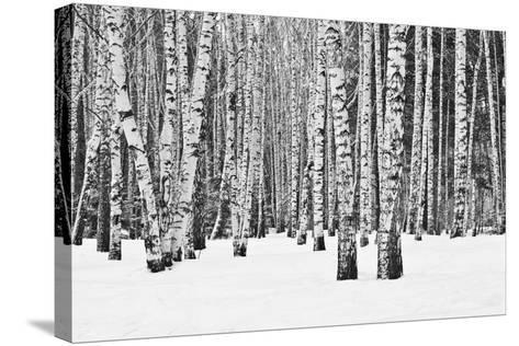 Birch Forest in Winter in Black and White- furtseff-Stretched Canvas Print