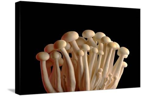Mushrooms Isolate on Black Background-Jie Xu-Stretched Canvas Print