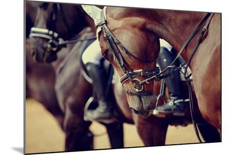 Portrait of a Sports Stallion. Riding on a Horse. Thoroughbred Horse. Beautiful Horse.-Elya Vatel-Mounted Photographic Print
